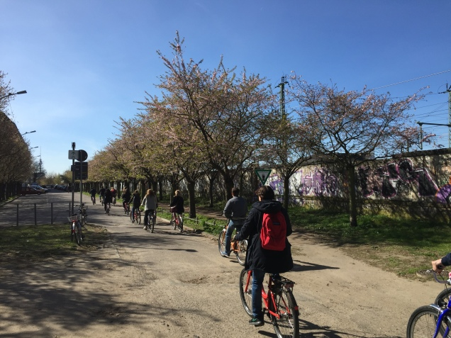 Sakura blossoms along Berlin Wall trail